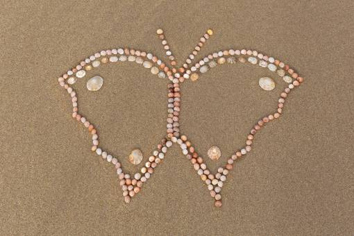 a beautiful butterfly made out of small shells