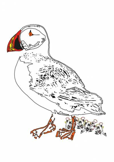 Pen and Ink style drawing of Puffin with coloured bill and feet