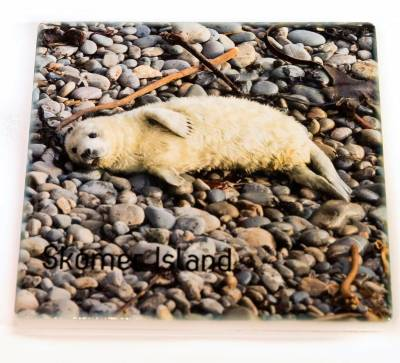 Ceramic coaster with image of seal pup
