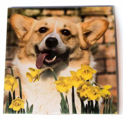Tea Pot stand with cork backing with corgi and daffodils