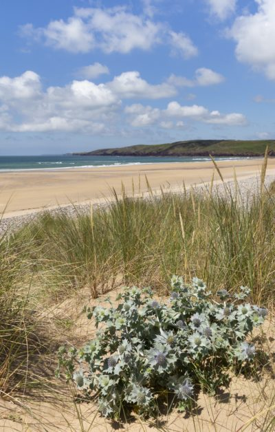 a view from the dunes at freshwater west