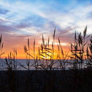 Newgale Sunset through the reeds