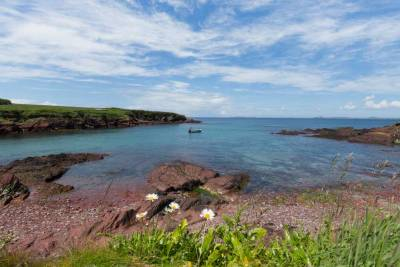 St Brides Bay with daisies in the foregroound and small fishing boat anchored in the bay