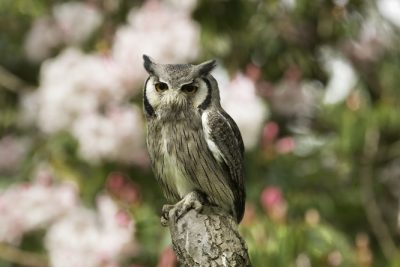 Beautiful owl with flowers in the background