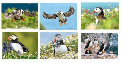 Selection of my favourite puffin cards picked for you