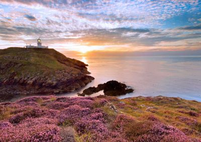 Pink heather in the foreground at Strumble head looking at the lighthouse as the sun sets with dramatic blue skies