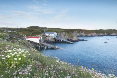flowers in the foreground on the coast path with the two lifeboat stations at St Justinians in evening light