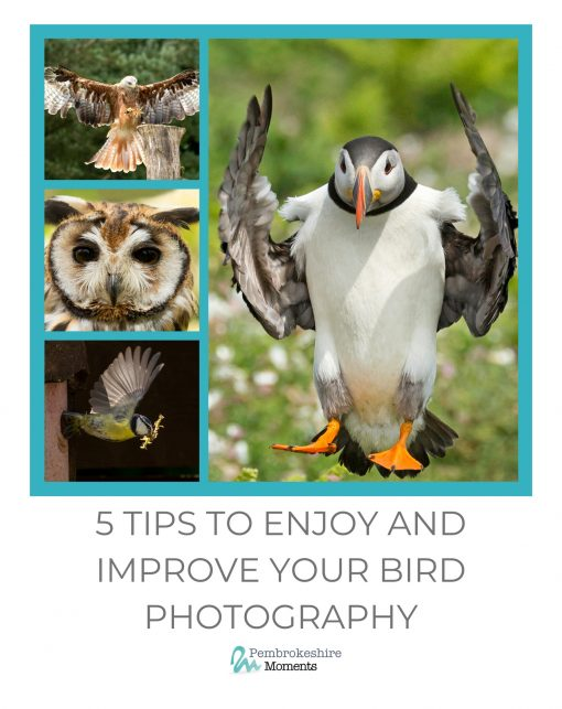 five tips that will help you improve your bird or puffin photography