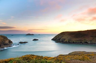 wisps of sea fog lit up pink at sunset over the mouth of solva harbour with yellow gorse on the gribin in the foreground