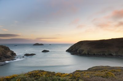 last light at solva harbour taking from the gribin looking out to sea through the entrance with pink clouds and sea fog lit up pink against blue skies and gorse on the solva cliff